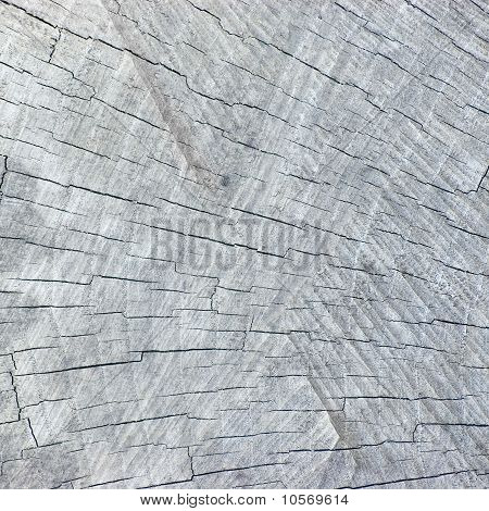 Large Natural Weathered Grey Tree Stump Cut Texture Background