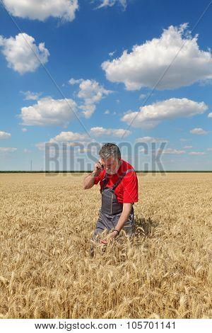 Farmer Inspect Wheat Field