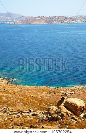 Bush   In Delos Greece The   Old Ruin Site