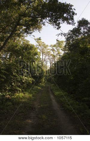 Parque Nacional de Chitwan - Nepal
