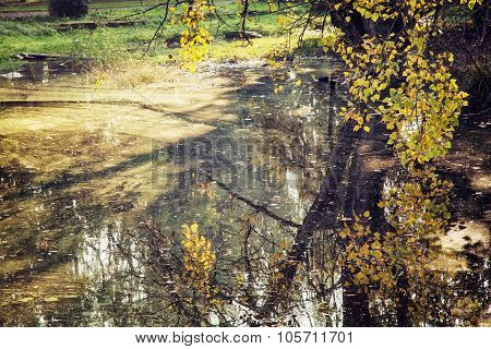 Beech Tree Over The Lake In The Fall, Natural Scene