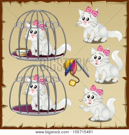 Set of fluffy white cats trapped in a steel cage