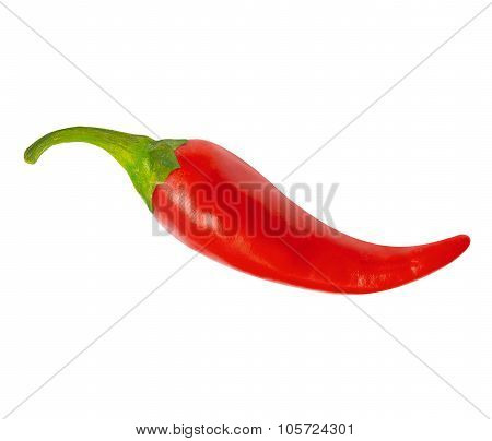 One red hot chili pepper, with clipping path