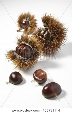 Chestnuts And Urchins