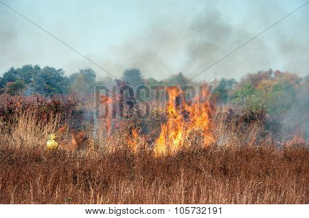 Brush fire 3