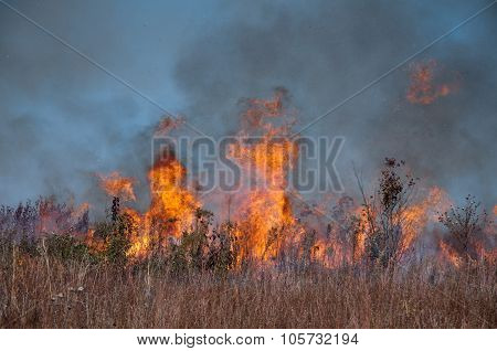 Brush fire 2