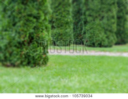 Green Garden Defocused Abstract Background
