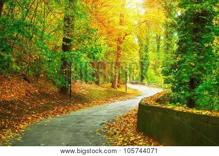 Track in autumnal park with yellow trees and sunny sunbeam. Illustration