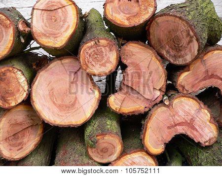 log tree