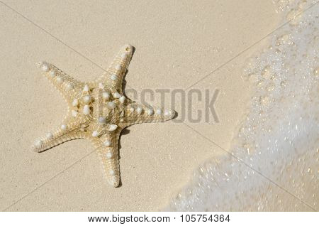 Starfish On Beach With Tide Coming In