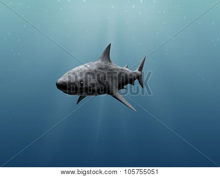 Tranquil Underwater View With Withe Shark