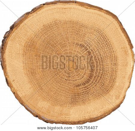 Sectional View Of Tree