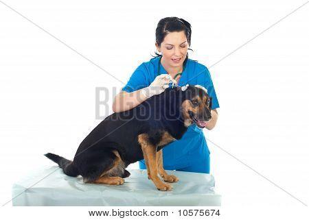 Vet Cleaning  Dog Ear
