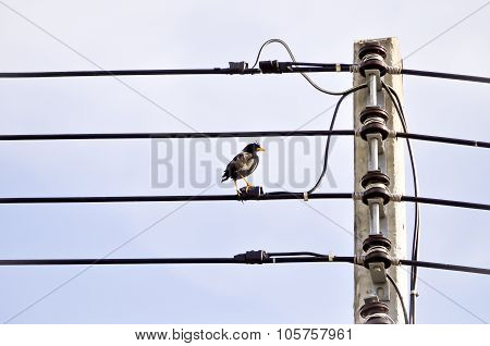 Electricity Post And A Bird