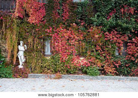 Liana On House Wall