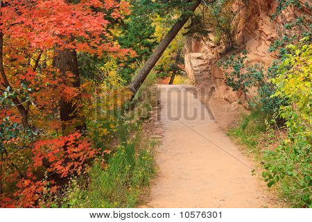 Forest Path In The Fall