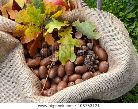 Rustic Basket With Fall Oak Leaves And Acorns
