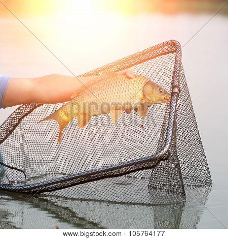 Fish Catch In Sun Rays