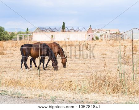 Horses Greenhouses Agriculture
