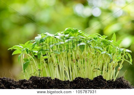 Young Plant Growing On Soil