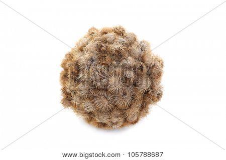 Ball of Burrs