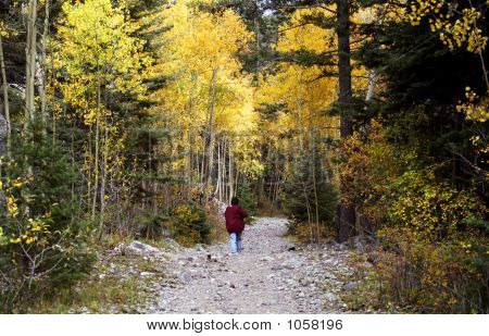 Woman Walking A Mountain Trail In The Fall