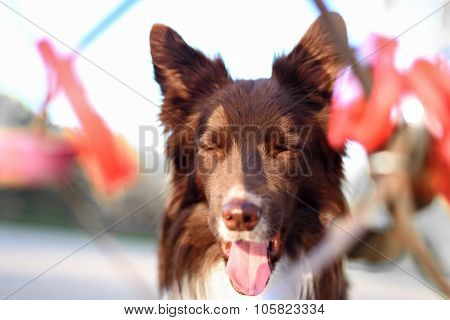 funny dog playing in the playground