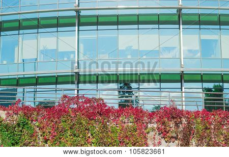 Office Building And The Wall Covered Virginia Creeper Autumn