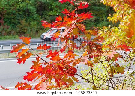 Branches Of Autumn Oak Against The Backdrop Of The Motorway