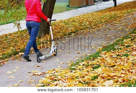Autumn Walk In The Park.