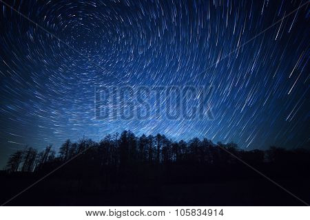 night sky star trails and the forest