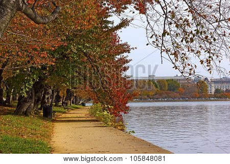 Alley of cherry trees in fall foliage near the water in Washington DC USA.