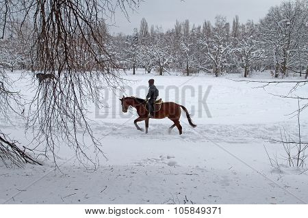 A Young Man Riding A Horse On A Snow-covered Park. Horseback Riding Russian Winter