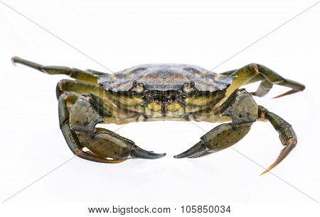 Crab Live