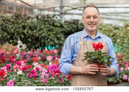 Cheerful old florist with eyeglasses in garden center