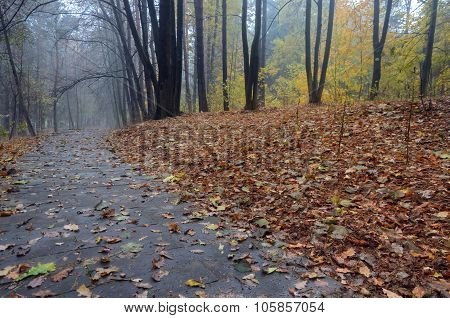 Road Through Autumn Forest After Rain