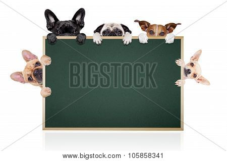 Row Of Dogs Placard
