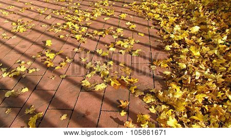yellow leaves on the pavement