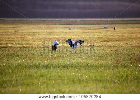 Stork rain