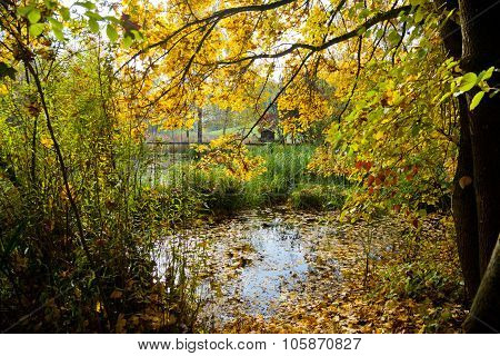 Biotope In Fall With A Yellow Tree