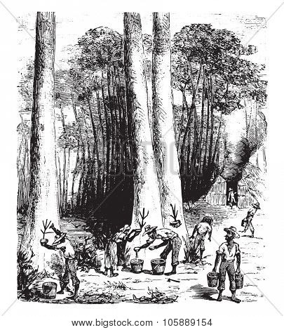 Rubber extraction, vintage engraved illustration. Industrial encyclopedia E.-O. Lami - 1875.