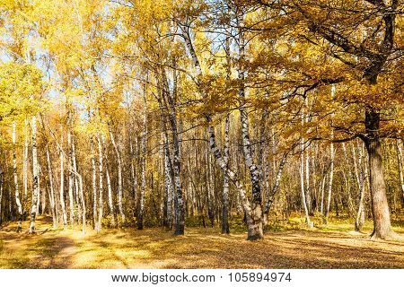 Glade In Oak And Birch Woods In Autumn