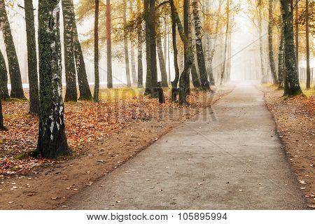 Foggy Autumn Fores
