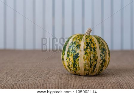 Green striped pumpkin on white wooden backgraund, copy space for text