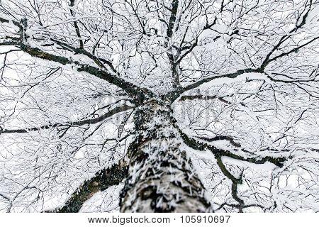 A Snowy Treetop In The Winter Season