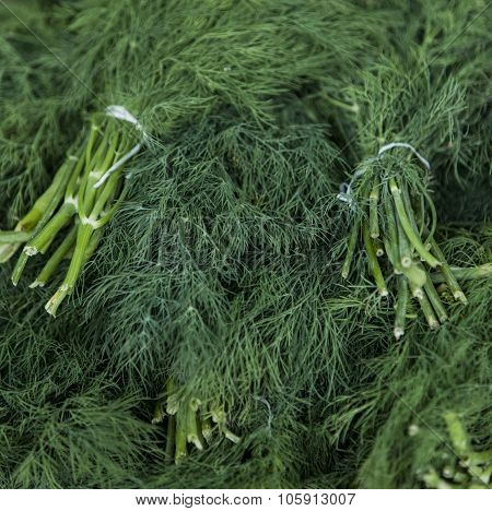 Dill On The Market