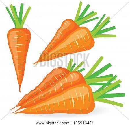 Vector Carrots Set