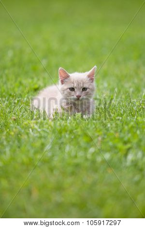Cute Cat On The Grass