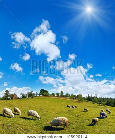 Sheep Herd On Summer Mountain Hill Top