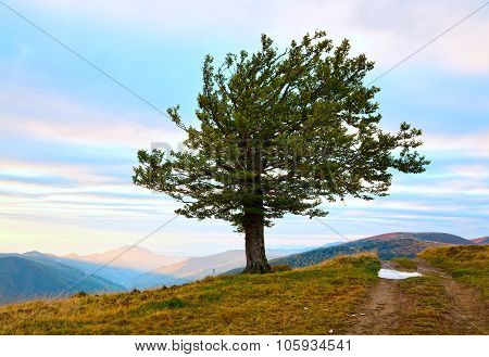 Lonely Tree In Autumn Mountain